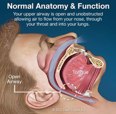 Snoring & Sleep Apnea - Normal Anatomy & Function